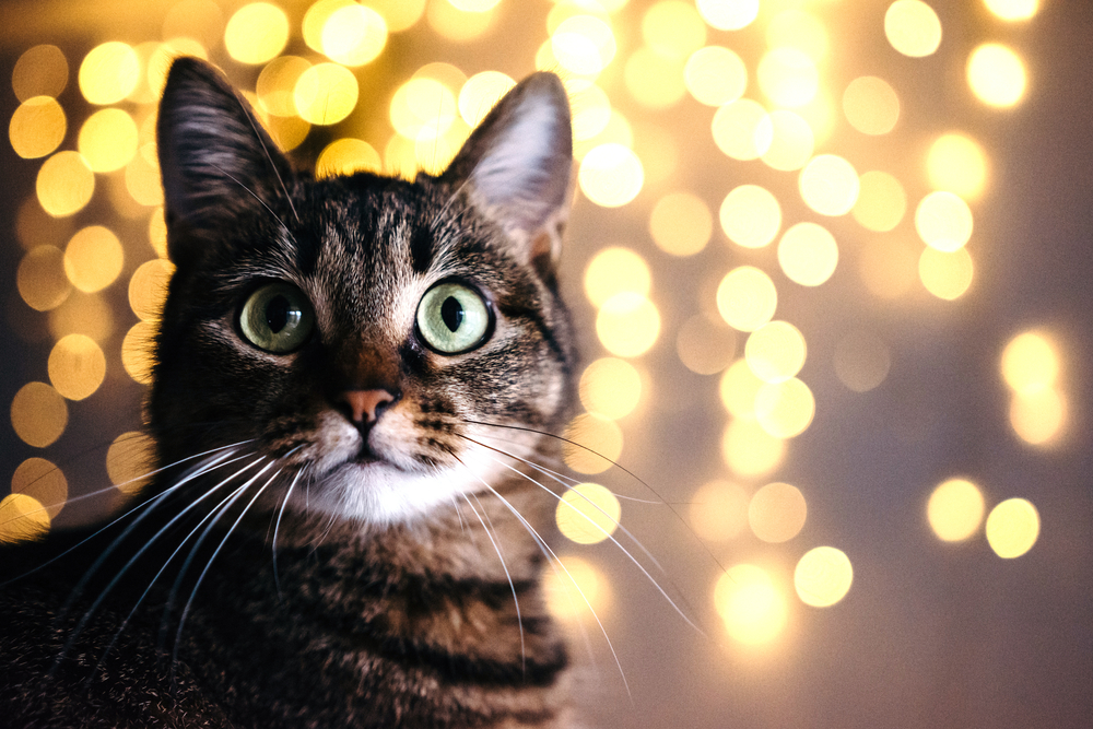 10 New Year's Resolutions for Your Pet's Good Health