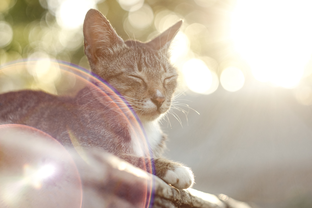 4 Summer Safety Tips for Pets with Cancer