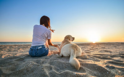 7 Enrichment Ideas for Your Pet Undergoing Cancer Treatment