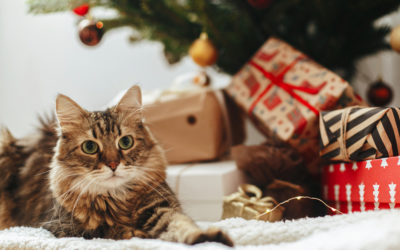 5 Perfect Gifts for Your Pet with Cancer